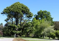 Δέντρα, βοτανικοί κήποι Christchurch, Νέα Ζηλανδία Στοκ Εικόνα