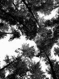 Δέντρα βουνών Στοκ εικόνα με δικαίωμα ελεύθερης χρήσης