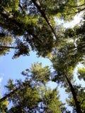 Δέντρα βουνών Στοκ Φωτογραφίες