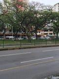 Δέντρα βροχής κατά μήκος του δρόμου της Σιγκαπούρης Στοκ φωτογραφίες με δικαίωμα ελεύθερης χρήσης