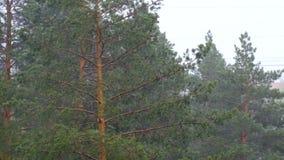 Δέντρα βροχής τυφώνα απόθεμα βίντεο