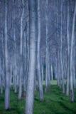δέντρα γραμμών στοκ φωτογραφίες με δικαίωμα ελεύθερης χρήσης