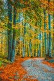 δέντρα γύρω από το μικρό δρόμο και ξηρά φύλλα στο έδαφος στοκ εικόνες
