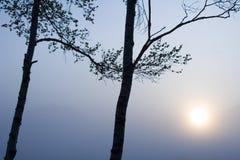 δέντρα δύο ήλιων στοκ φωτογραφία με δικαίωμα ελεύθερης χρήσης