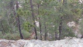 Δέντρα λεμονιών ΑΜ Στοκ Φωτογραφίες