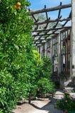Δέντρα λεμονιών από το παλαιό Limonaia, το οποίο περιέχει πολλές παλαιές εγκαταστάσεις Στοκ Εικόνες
