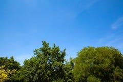 Δέντρα ενάντια σε έναν μπλε ουρανό Στοκ εικόνα με δικαίωμα ελεύθερης χρήσης