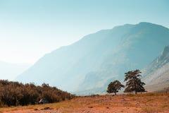 Δέντρα ενάντια στα βουνά στο ηλιοβασίλεμα Altai, Σιβηρία, Ρωσία στοκ φωτογραφίες με δικαίωμα ελεύθερης χρήσης