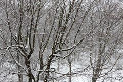Δέντρα ενώ αναταραχή χιονιού μπλε snowflakes ανασκόπησης άσπρος χειμώνας Στοκ Εικόνες
