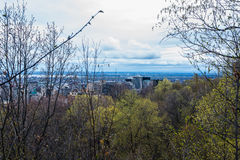 Δέντρα επάνω από το Μόντρεαλ Στοκ εικόνα με δικαίωμα ελεύθερης χρήσης