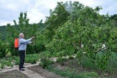 Δέντρα επεξεργασίας στον κήπο από τα παράσιτα στοκ εικόνα με δικαίωμα ελεύθερης χρήσης