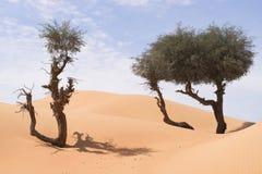 Δέντρα ερήμων Στοκ Εικόνα