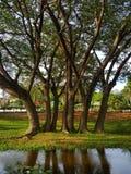 Δέντρα ευθύγραμμα Στοκ Φωτογραφία