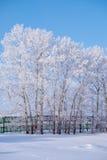 Δέντρα λευκών κάτω από το hoarfrost στον τομέα χιονιού στη χειμερινή εποχή Στοκ Φωτογραφία