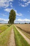 Δέντρα λευκών και αγροτική διαδρομή Στοκ φωτογραφία με δικαίωμα ελεύθερης χρήσης