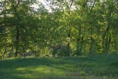 Δέντρα λευκών πίσω από τους πράσινους θάμνους Στοκ φωτογραφία με δικαίωμα ελεύθερης χρήσης