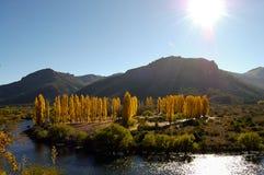 Δέντρα λευκών - Παταγωνία - Αργεντινή Στοκ εικόνες με δικαίωμα ελεύθερης χρήσης