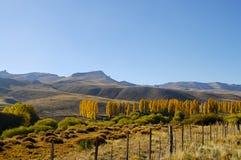 Δέντρα λευκών - Παταγωνία - Αργεντινή Στοκ Εικόνες