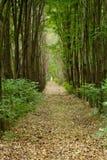 Δέντρα λευκών στο δάσος Στοκ φωτογραφία με δικαίωμα ελεύθερης χρήσης