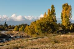 Δέντρα λευκών το φθινόπωρο Στοκ Εικόνα