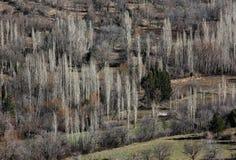 Δέντρα λευκών το χειμώνα, Τουρκία Στοκ Εικόνες
