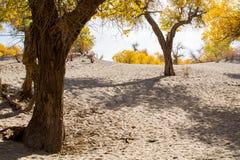 Δέντρα λευκών Στοκ φωτογραφίες με δικαίωμα ελεύθερης χρήσης