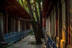 Δέντρα, ζωηρόχρωμο περίπτερο, του ναού Κομφουκίου στο Πεκίνο στοκ φωτογραφίες