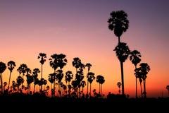 δέντρα ηλιοβασιλέματος σκιαγραφιών φοινικών Στοκ εικόνες με δικαίωμα ελεύθερης χρήσης