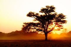 δέντρα ηλιοβασιλέματος σκιαγραφιών Στοκ Εικόνες