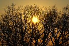δέντρα ηλιοβασιλέματος Στοκ Φωτογραφία