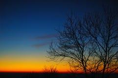 δέντρα ηλιοβασιλέματος Στοκ εικόνες με δικαίωμα ελεύθερης χρήσης