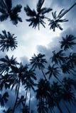 δέντρα ηλιοβασιλέματος &ph Στοκ Εικόνες