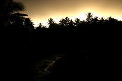 δέντρα ηλιοβασιλέματος &ph στοκ εικόνες με δικαίωμα ελεύθερης χρήσης