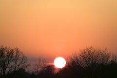 δέντρα ηλιοβασιλέματος &si Στοκ εικόνα με δικαίωμα ελεύθερης χρήσης