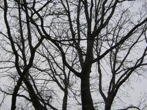Δέντρα, δημόσιος κήπος της Βοστώνης, Βοστώνη, Μασαχουσέτη, ΗΠΑ Στοκ Εικόνες