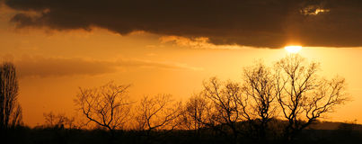 Δέντρα ηλιοβασιλέματος Στοκ φωτογραφίες με δικαίωμα ελεύθερης χρήσης