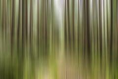 Δέντρα θαμπάδων κινήσεων Στοκ φωτογραφία με δικαίωμα ελεύθερης χρήσης