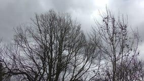 Δέντρα θύελλας απόθεμα βίντεο