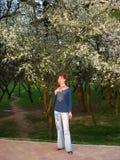 δέντρα κάτω Στοκ Εικόνες