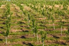 δέντρα κήπων μήλων στοκ εικόνα