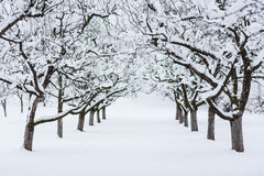 Δέντρα κήπων το χειμώνα Στοκ φωτογραφίες με δικαίωμα ελεύθερης χρήσης
