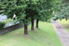 δέντρα κήπων Στοκ Εικόνες