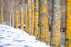 δέντρα κίτρινα Στοκ φωτογραφία με δικαίωμα ελεύθερης χρήσης