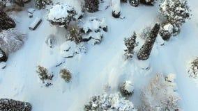 Δέντρα και έδαφος που καλύπτονται στο πρόσφατα πεσμένο κωνιώδες άσπρο χιόνι απόθεμα βίντεο