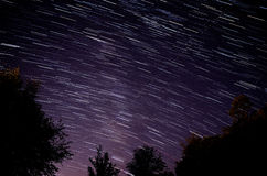 Δέντρα και ίχνη αστεριών Στοκ φωτογραφίες με δικαίωμα ελεύθερης χρήσης