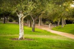 Δέντρα και ίχνη στο πάρκο Στοκ Φωτογραφία