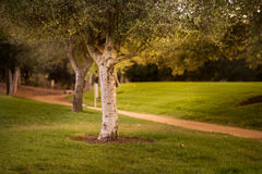 Δέντρα και ίχνος Στοκ φωτογραφίες με δικαίωμα ελεύθερης χρήσης