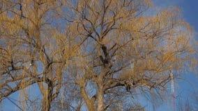 Δέντρα και αεράκι ιτιών φιλμ μικρού μήκους