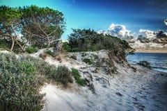 Δέντρα και αμμόλοφοι πεύκων στη Μαρία Pia Στοκ Εικόνες