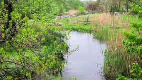 Δέντρα και ανάπτυξη χλόης σε έναν ποταμό απόθεμα βίντεο